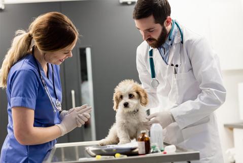 Cera-Pet für Ärzte